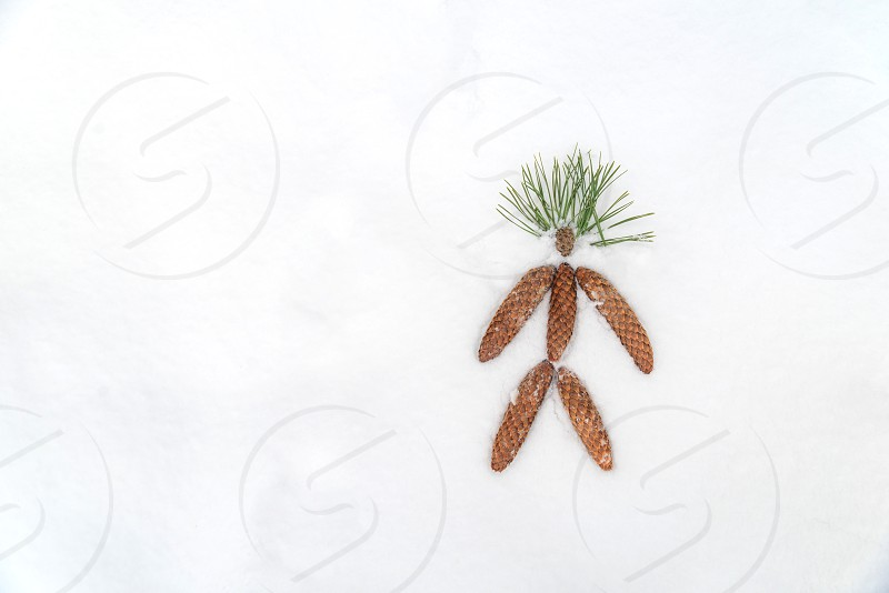 snow painted pine cones  Christmas decoration background photo