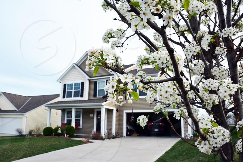 green flowering tree near house photo