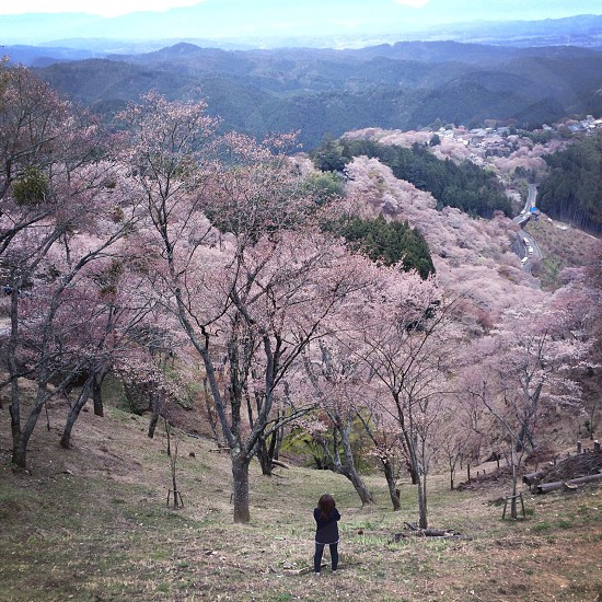 person standing by the pink trees photo