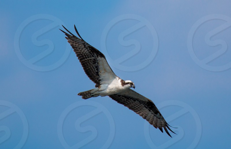 white and grey bird flying under blue sky during daytime photo
