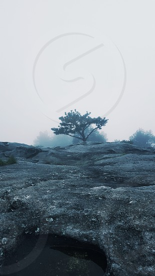 lonely tree finds itself in fog photo