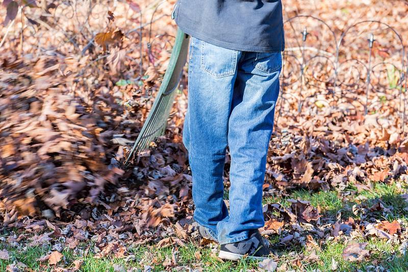 A teenager raking leaves in the yard photo