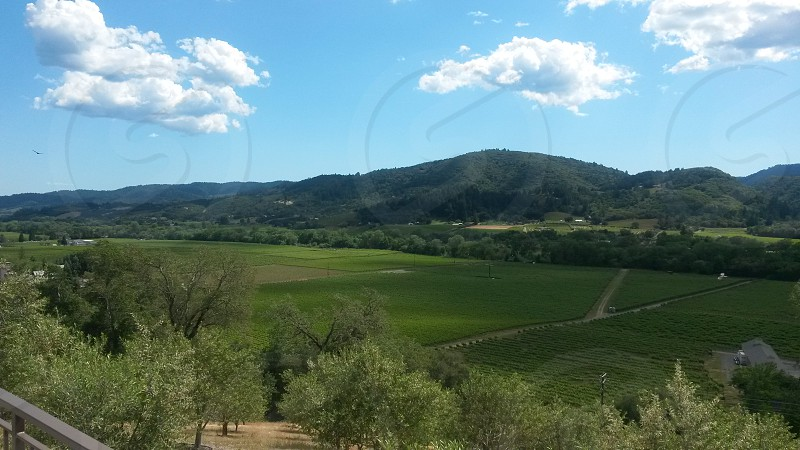Northern California Wine Country photo