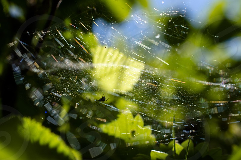 spider web reflections photo
