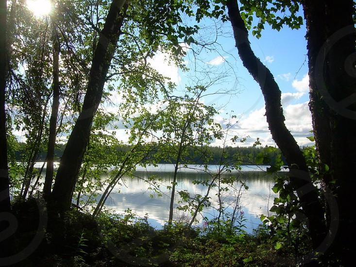 sun shine lake shadows light water clouds green woods nature photo
