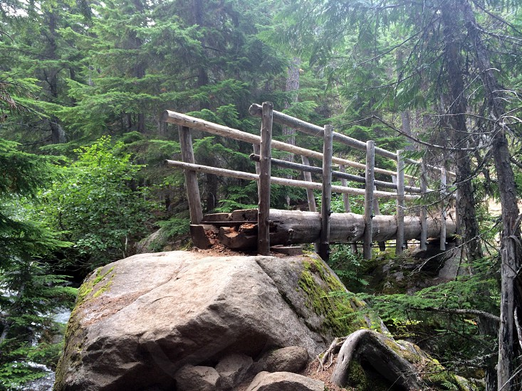 bridge enchanted forest adventure hike rocks rivers wildlife pine evergreen ferns logs fog magical photo
