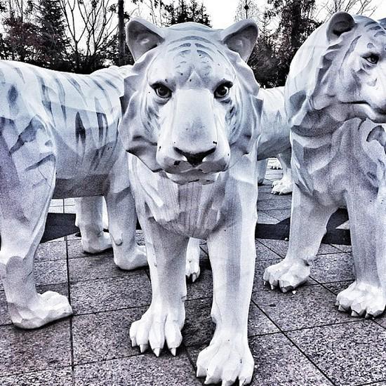 Tiger sculptures photo