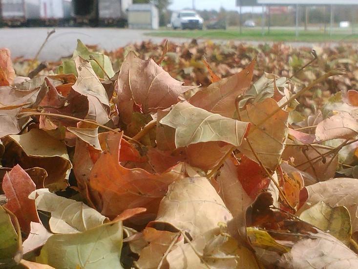 Fall leaves color outside  photo