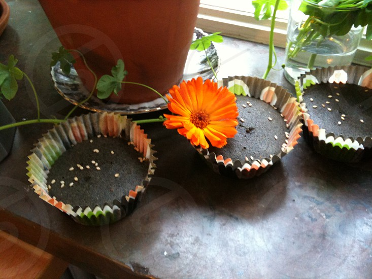 marigold muffins flowers decoration photo