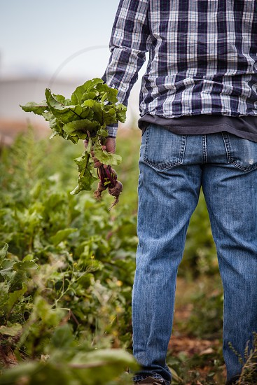 person in blue white and grey plaid sport shirt and blue denim jeans holding crop plant photo