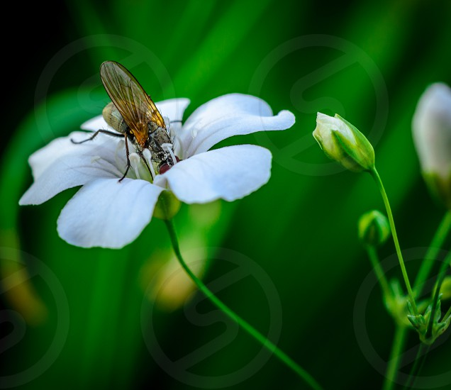 flower bug insect green photo