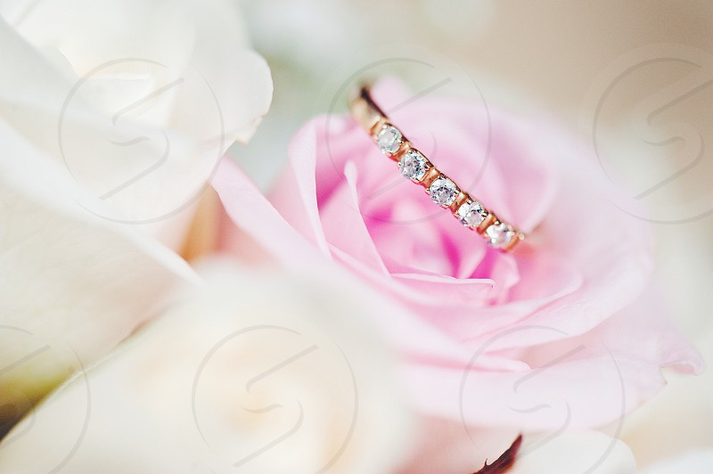 yellow diamond eternity ring resting on the petals of a pale pink rose photo
