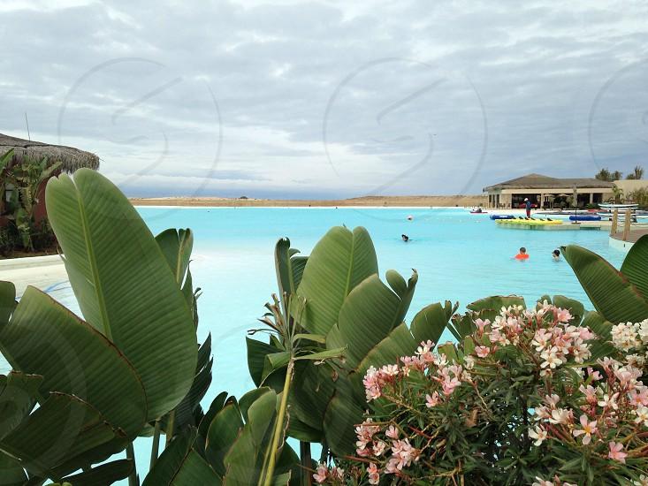 people swimming on pool photo