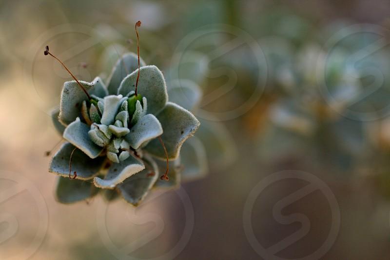 Macro photo of a plant.  photo