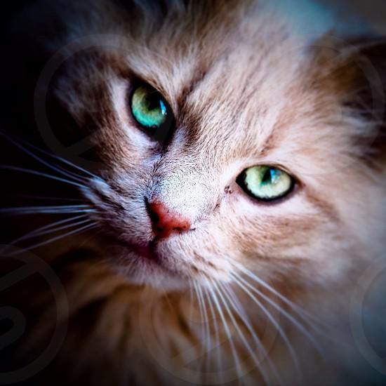 Cat eyes #m3 photo