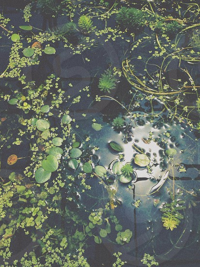pond with different leaves floating on the water photo