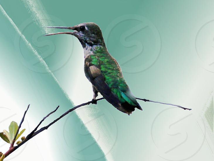Hummingbird with artificial background photo