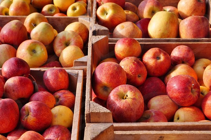 apple fruit crate fall autumn farmers market food photo