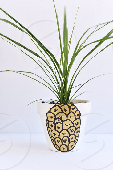 Pineapple plant planter pot garden funny spring fruit bright humor photo