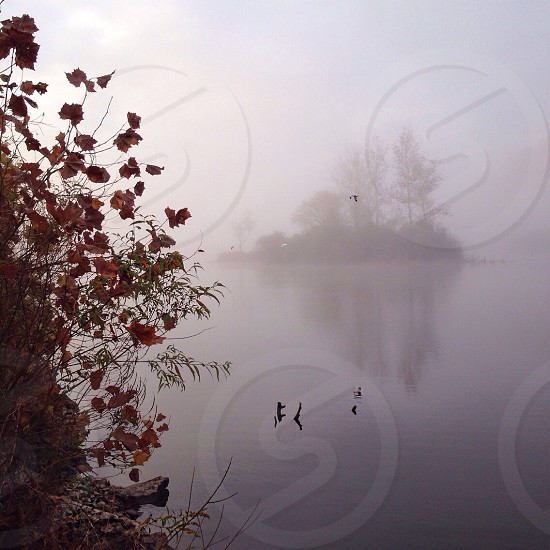 || Fog in Autumn || photo