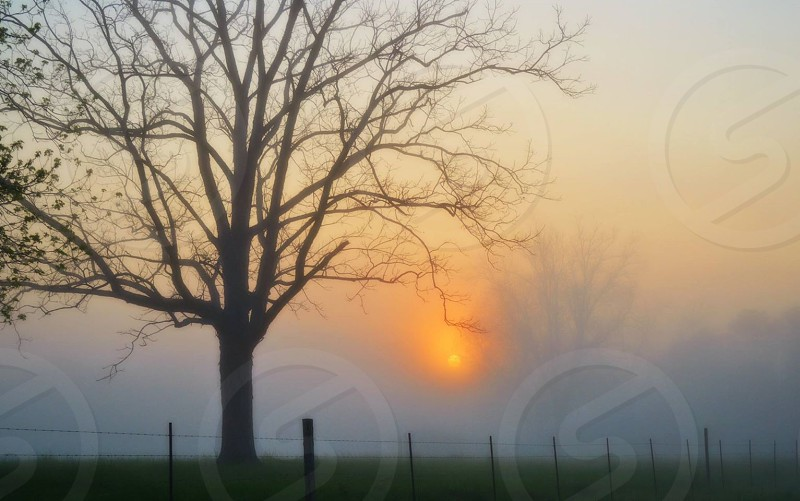 foggy sunrise over green pasture and bare tree photo