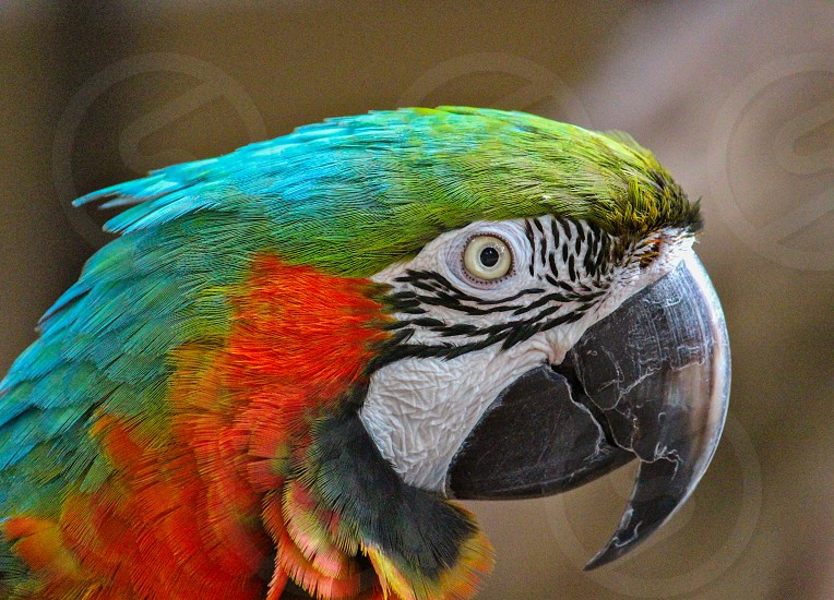 green blue and orange parrot photo