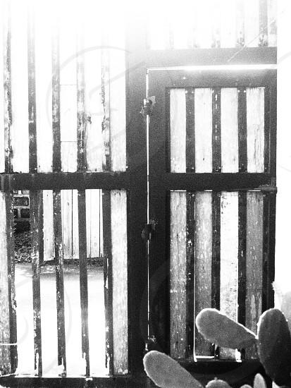 The Door photo