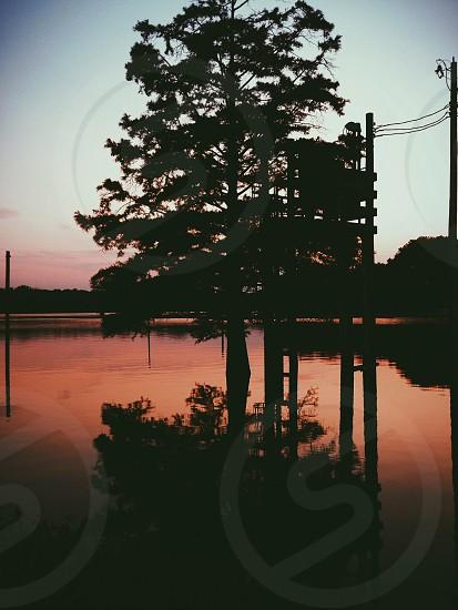 Tree in Water Under Blue Sky photo