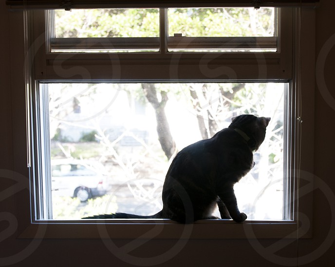 Cat looking out window  photo