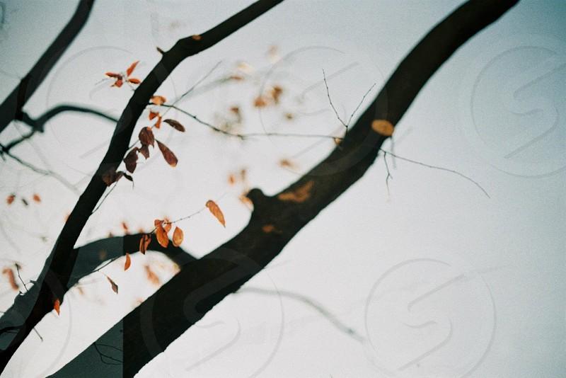 Autumn feelings. photo