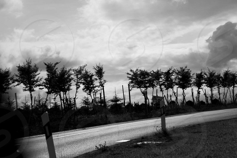 trees across road grayscale photography  photo