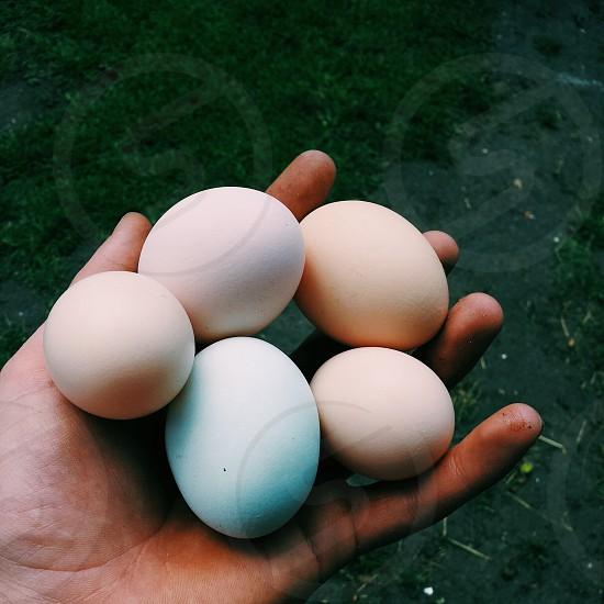 multicolored chicken eggs vscocam vsco photo