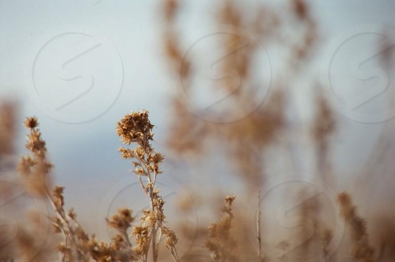 Winter dry  photo