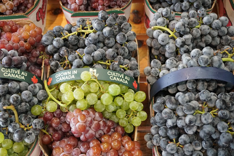 Winery; Canada; Niagara-on-the-Lake; Canadian winery; grapes; wine grapes; fruit  photo