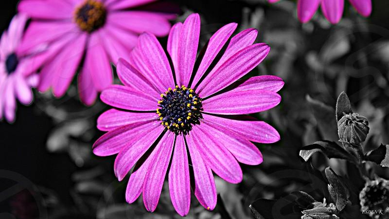 Purple pop of color!  photo