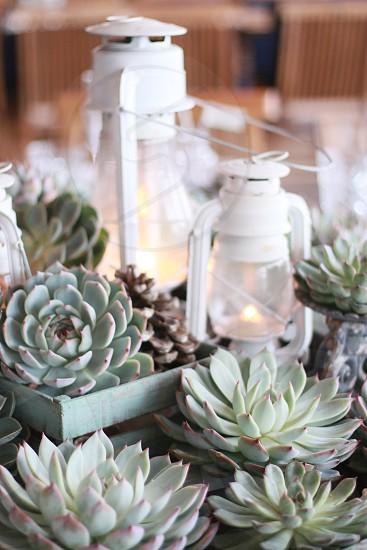 Succulents lanterns centerpiece Vintage Wedding Love stylist Sweden photo