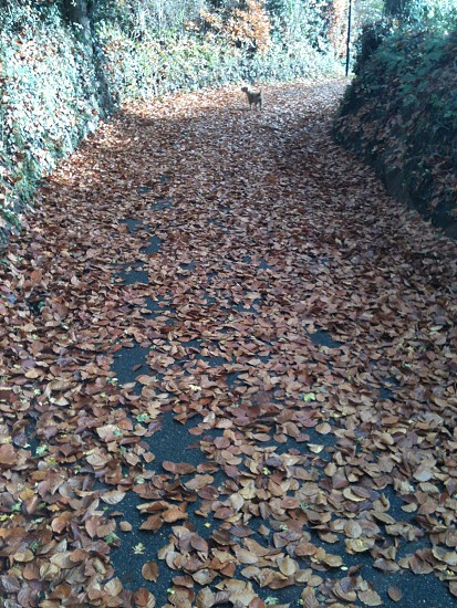 all the leaves are brown and lying on the ground photo