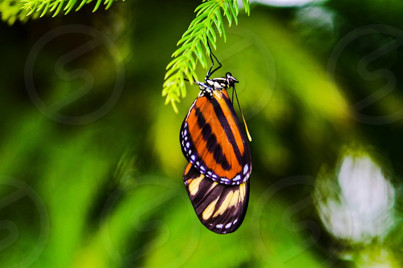 monarch butterfly drying wings insects macro vibrant orange new life nature arthropods photo
