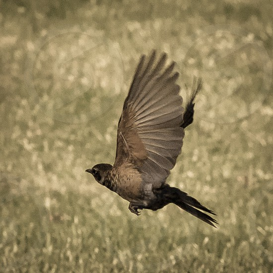 Bird In Flight photo