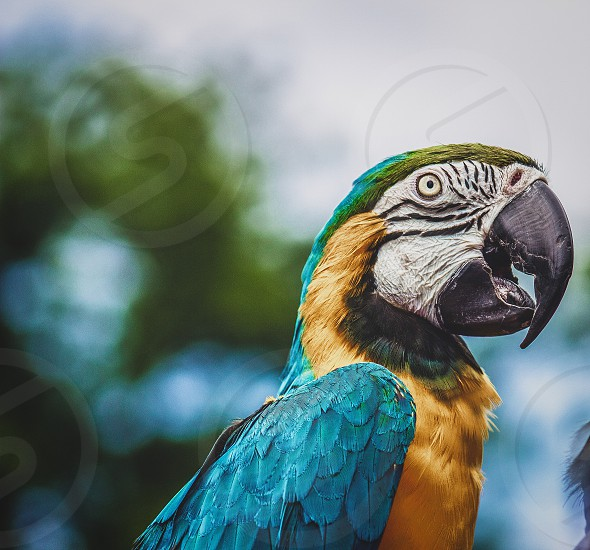 Blue and yellow macaw parrot photo