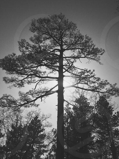 Sun & Tree. photo