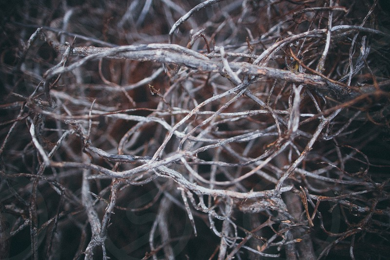 grey twigs photo