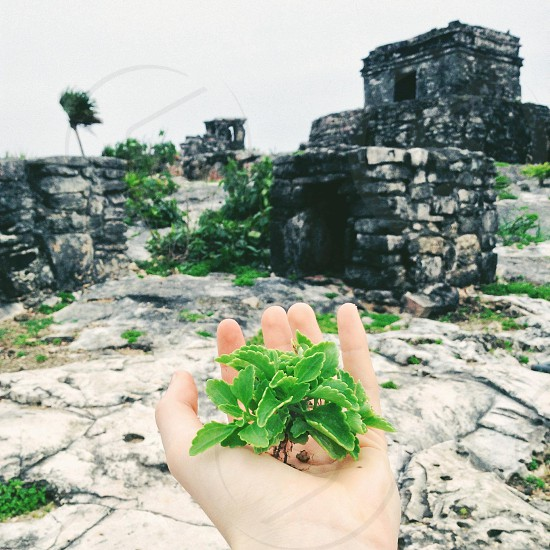 green leaves plant on hand with ruins view photo