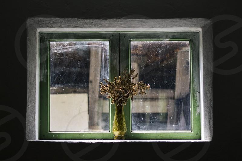 Basil herb window vintage light rural photo