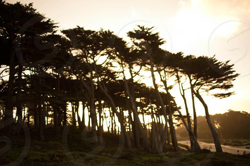 Nature trees golden sun  photo