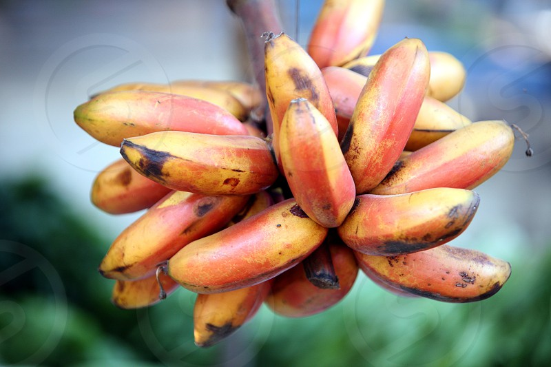 bananas at the Market in the city of Dili in the east of East Timor in southeastasia.