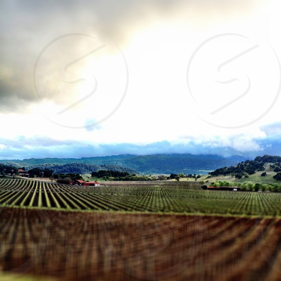 Vineyards Napa Valley clouds cloudy winemaking grapes hills wine California  photo