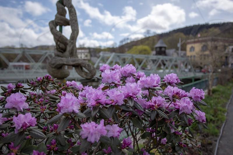 Bloom at the Bridge of Flowers in Shelburne Falls Massachusetts located inside the Berkshires  photo
