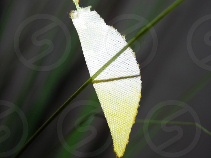white cocoon photo