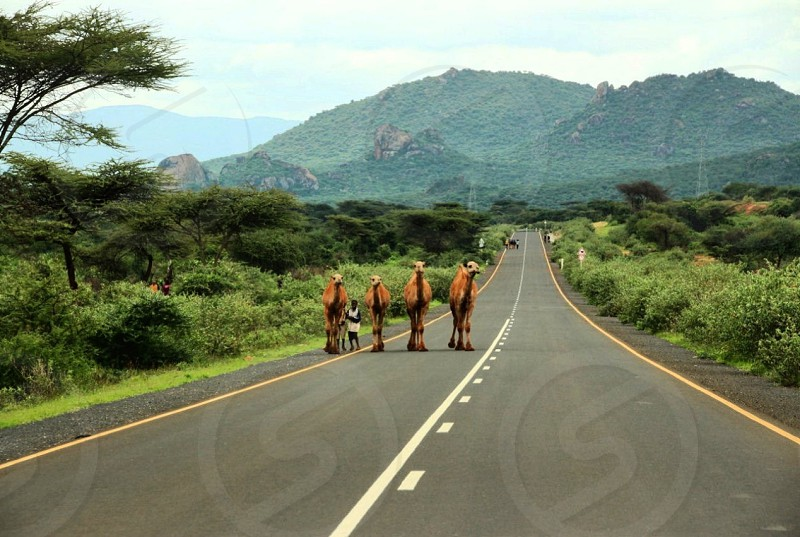 Africa Ethiopia road to hell Cape Town to Cairo by car road trip travel  photo